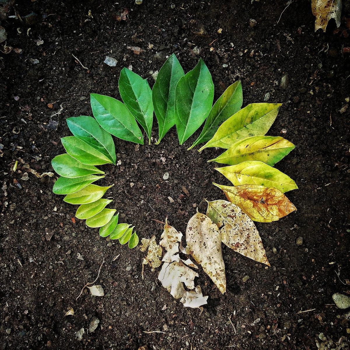 leaf-3341897_1280